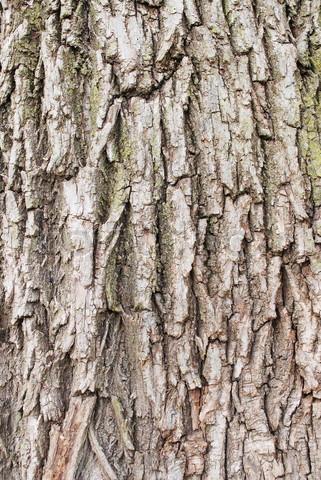 3796839-841438-willow-tree-bark-texture